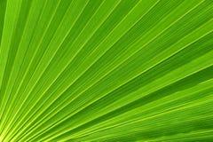 Lame de palmier Image stock