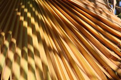 Lame de palmier photos libres de droits