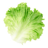 Lame de salade Photographie stock libre de droits