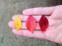 Lame de trois automnes Photo stock