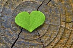 Lame de vert de forme d'amour Photographie stock libre de droits