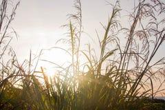 Lame del sole dell'erba di mattina Fotografia Stock Libera da Diritti