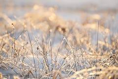Lame dell'erba coperte di ghiaccio e di scintillare alla luce solare su un prato di inverno fotografia stock