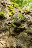 Lame delle piante di erba sole sulla scogliera Fotografia Stock Libera da Diritti