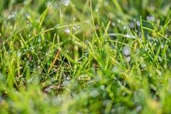 Lame di erba con la luce di mattina Fotografie Stock