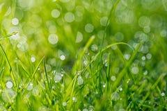 Lame di erba con la luce di mattina Fotografia Stock