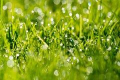Lame di erba con la luce di mattina Immagine Stock