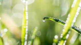 Lame di erba verde con le gocce di pioggia di luccichio Immagini Stock Libere da Diritti