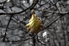 Lame en automne Images libres de droits