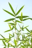 Lame en bambou Image stock