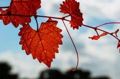Lame en forme de coeur d'automne Photos stock