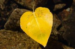 Lame en forme de coeur d'automne Photographie stock libre de droits