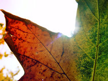 Lame en soleil Photographie stock libre de droits
