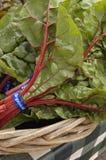 Lame et tige de rhubarbe Images libres de droits