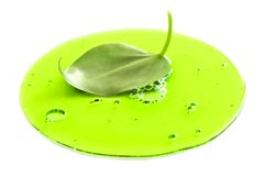 Lame fraîche dans le liquide vert image libre de droits