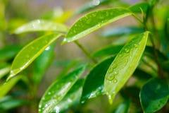 Lame humide Image libre de droits