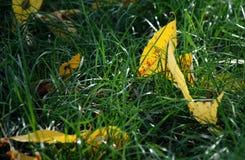 Lame jaune Image libre de droits
