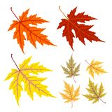 Lame jaune et rouge d'automne Photo stock