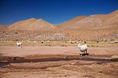 Lame nel deserto di Atacama Fotografia Stock