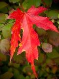 Lame rouge lumineuse Photographie stock libre de droits