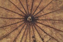 Lame sèche de lotus Photo libre de droits