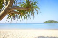 Lame tropicale Photo libre de droits