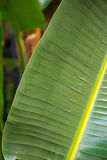 lame tropicale Image stock