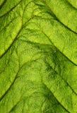Lame verte éclairée à contre-jour images stock