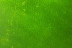 lame verte Photos libres de droits