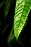 lame verte Images libres de droits