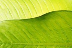 lame verte Photographie stock libre de droits