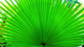 lame verte Photo libre de droits