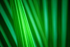 lame verte Photographie stock