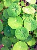 lame verte Image stock