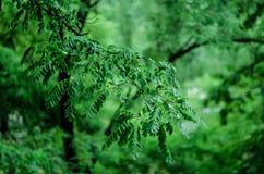 lame verte Image libre de droits