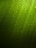 Lame verte avec des baisses de rosée images stock