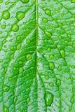 Lame verte avec des baisses de rosée Image stock