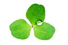 Lame verte avec des gouttelettes d'eau Photo libre de droits