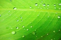 Lame verte avec des gouttes de l'eau Photographie stock libre de droits