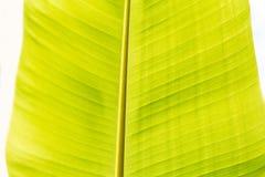 lame verte de banane Photos libres de droits