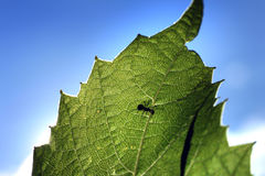 lame verte de fourmi Image libre de droits