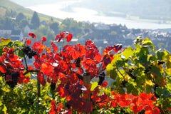 Lame verte rouge de vigne Photographie stock libre de droits