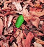 Lame verte sur le fond rouge Photographie stock libre de droits