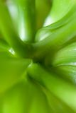 Lames abstraites vertes de la centrale Photo stock
