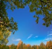 Lames, arbres et ciel bleu Images stock