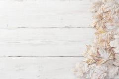 Lames blanches de pamle, fond en bois image stock