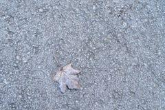 Lames colorées d'érable Feuilles d'automne brunes givrées Fond d'environnement naturel image libre de droits