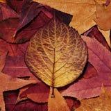 Lames colorées d'automne Images libres de droits