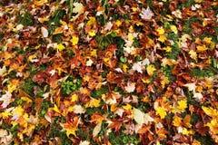 Lames colorées d'automne Photos libres de droits