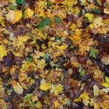 Lames colorées d'automne Images stock
